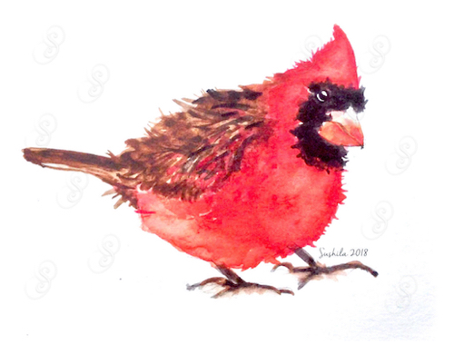 Male Cardinal, Watercolor on Paper