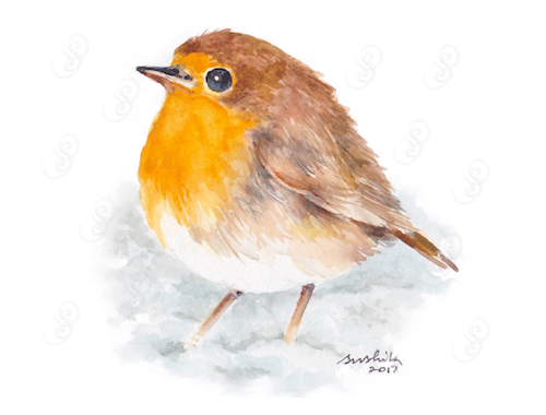 Robin in Snow, Watercolor on Paper